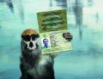 Я – обезьяна. Но могу стать человеком